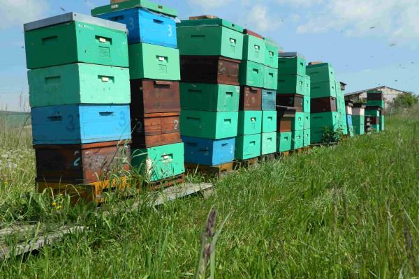 stanoviště včel